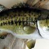 Dave Lenhardt Largemouth Bass Taxidermy